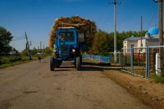 Tractor and dog drive through the center of the village