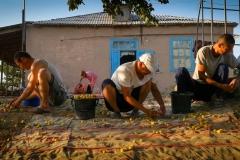 Makhmudjan Aytjanov (center) and cousins collect apricots in Shagyrlyq village, near Muynaq